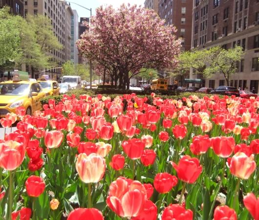 春のニューヨークのパーク・アベニュー_b0007805_1334596.jpg