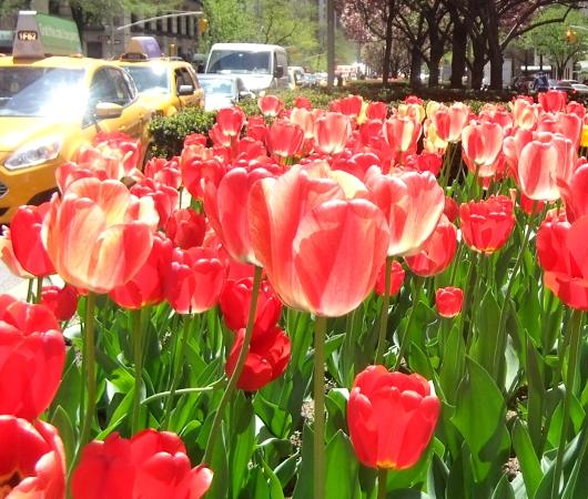 春のニューヨークのパーク・アベニュー_b0007805_1335654.jpg