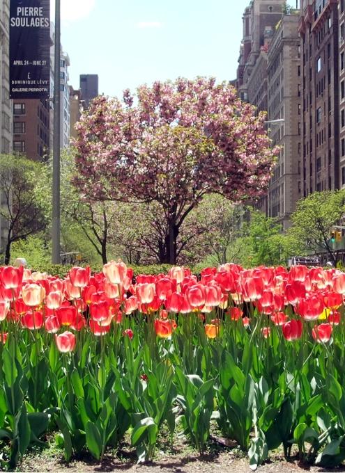 春のニューヨークのパーク・アベニュー_b0007805_1343244.jpg
