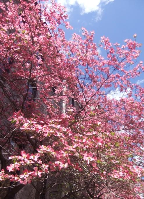 春のニューヨークのパーク・アベニュー_b0007805_134863.jpg