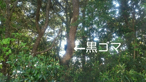 b0187620_21001.jpg