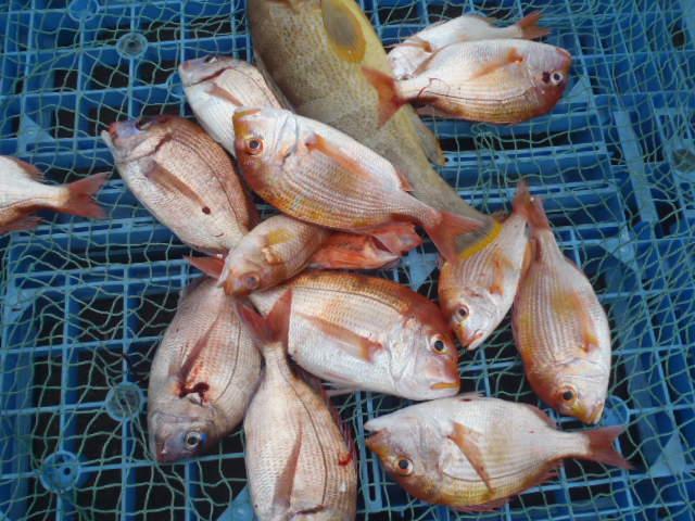 いまりマリーナ春の釣り大会♪_a0077071_11393069.jpg