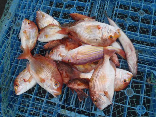 いまりマリーナ春の釣り大会♪_a0077071_11395778.jpg