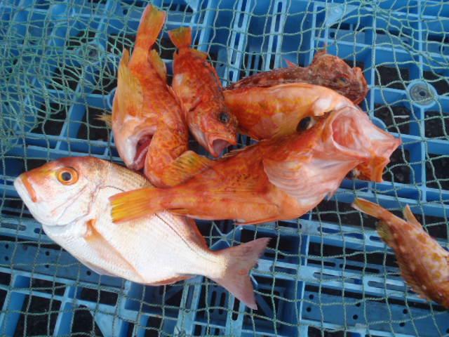 いまりマリーナ春の釣り大会♪_a0077071_11401292.jpg