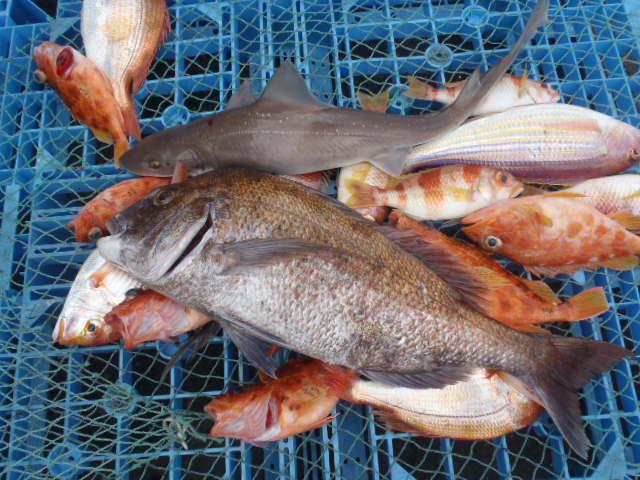 いまりマリーナ春の釣り大会♪_a0077071_11402675.jpg