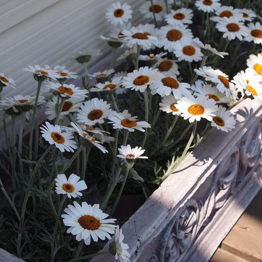 簡単に育てられるお花って?_a0292194_2214304.jpg