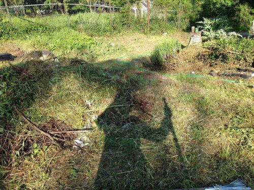 畑やってます_f0106597_16544336.jpg