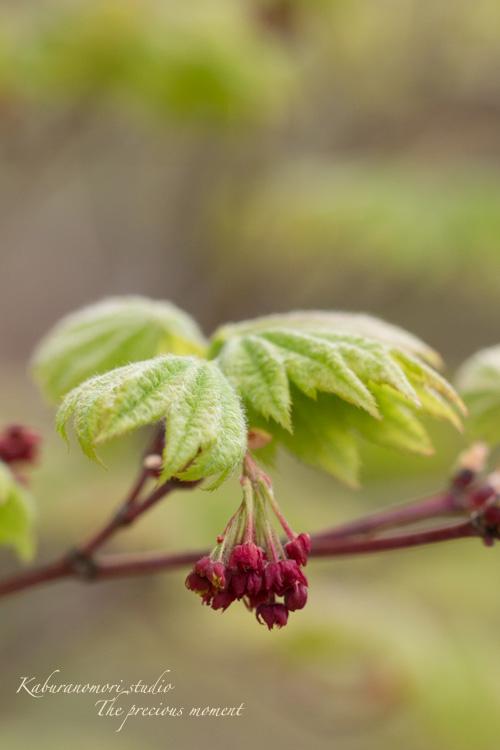 春の蕪フィールド_c0137403_16592854.jpg