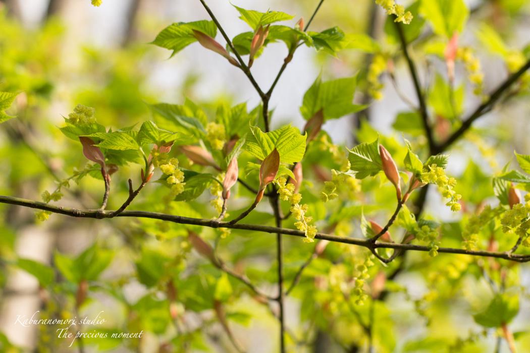 春の蕪フィールド_c0137403_170366.jpg