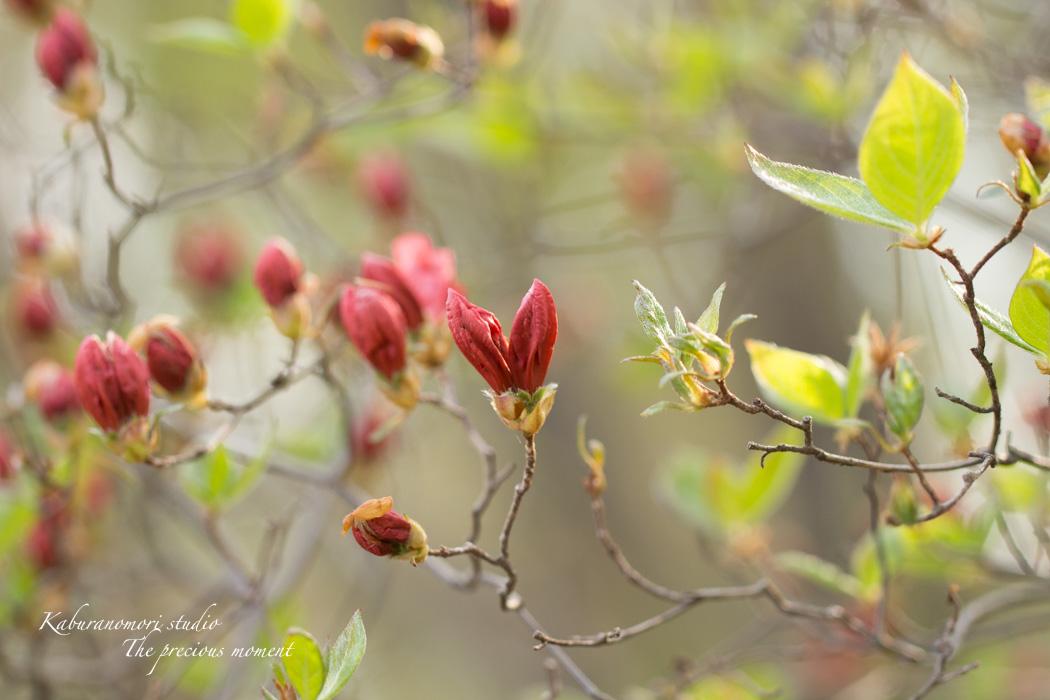 春の蕪フィールド_c0137403_171291.jpg