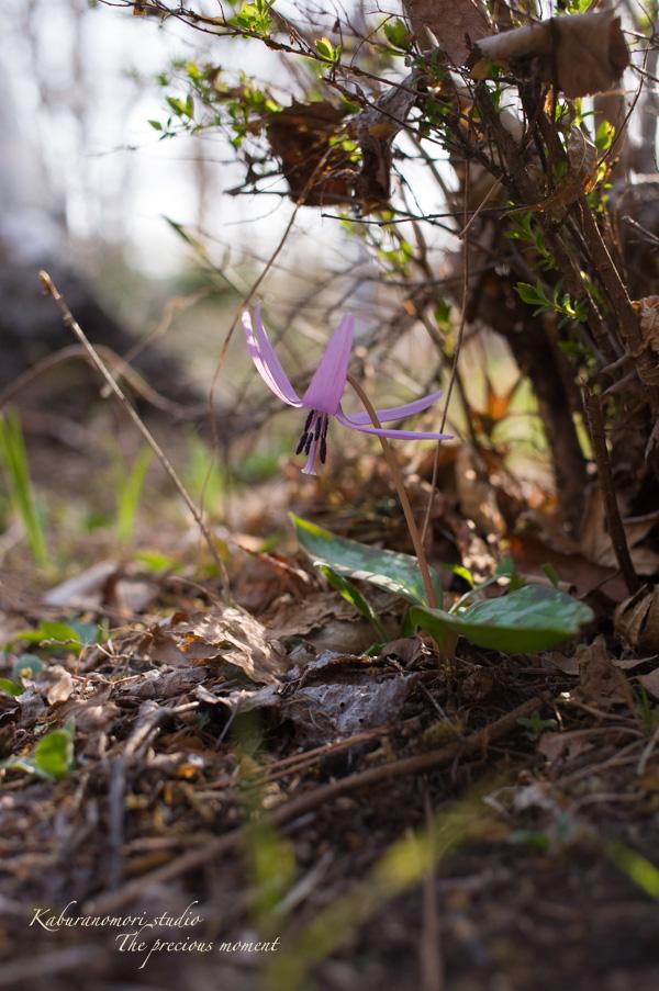 春の蕪フィールド_c0137403_189554.jpg
