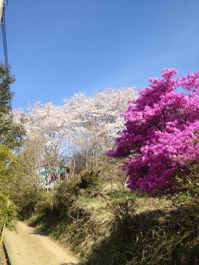 陣場から高尾山①_e0239908_22163344.jpg