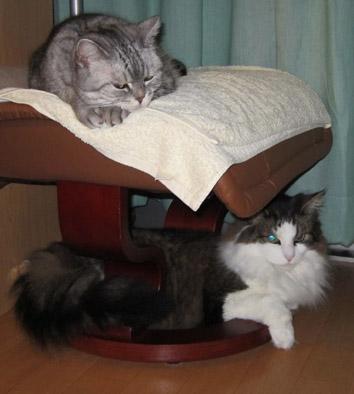 猫の格言_f0031709_15532122.jpg