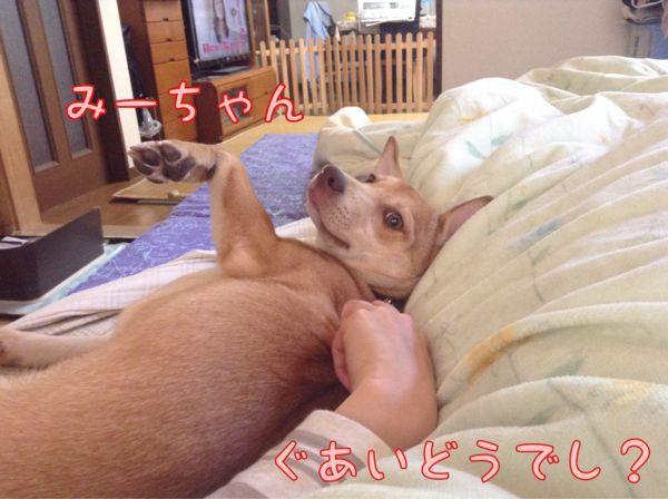f0329311_1314467.jpg