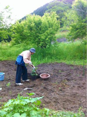 昨日の続き・・・農園は忙しい!_c0060919_37594.jpg