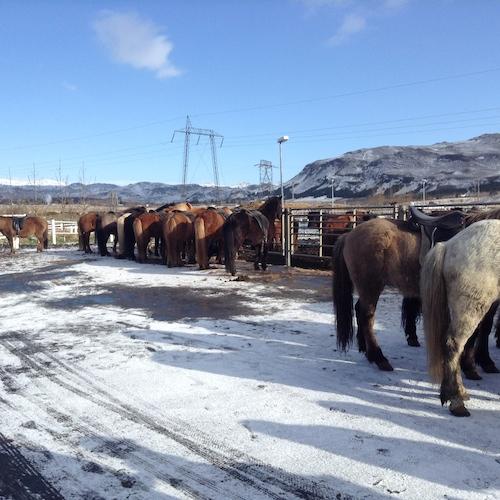 アイスランドの乗馬ツアーで人生初のパカパカを体験、楽しかったぁ!_c0003620_15222994.jpg