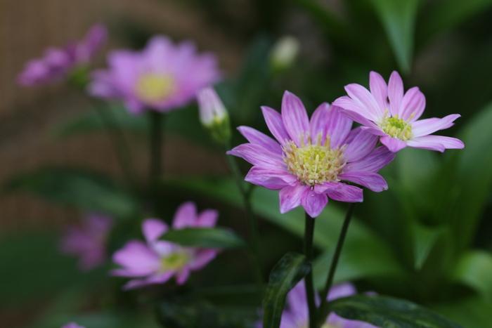 庭を彩る花々_d0150720_10163494.jpg