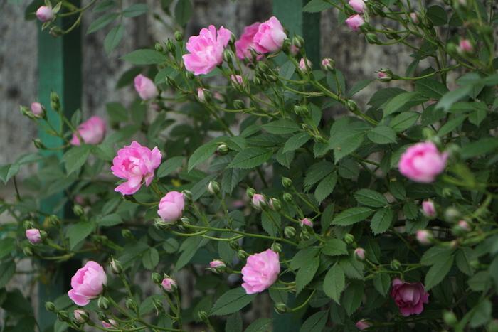 庭を彩る花々_d0150720_1019964.jpg
