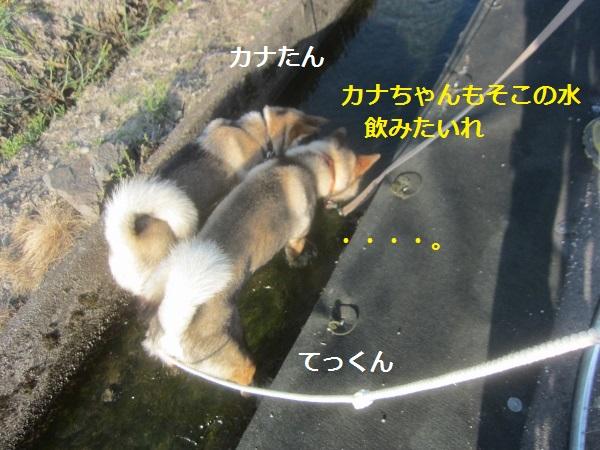 f0143123_14541957.jpg