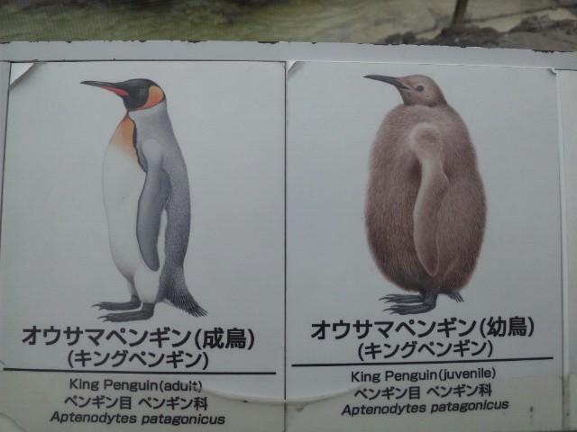 ペンギン???_a0147759_7165128.jpg