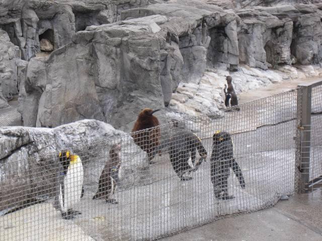 ペンギン???_a0147759_7165148.jpg
