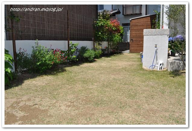 芝生の生育状況(4月~5月)_c0176271_016242.jpg