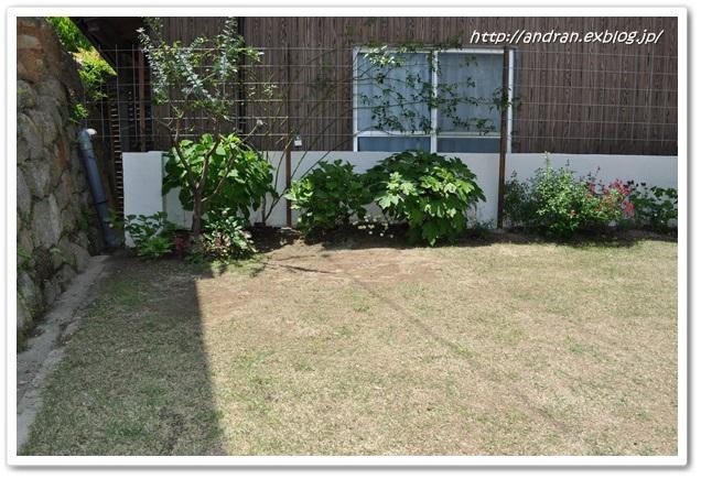 芝生の生育状況(4月~5月)_c0176271_01696.jpg
