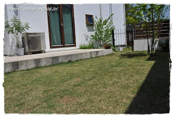芝生の生育状況(4月~5月)_c0176271_0181970.jpg