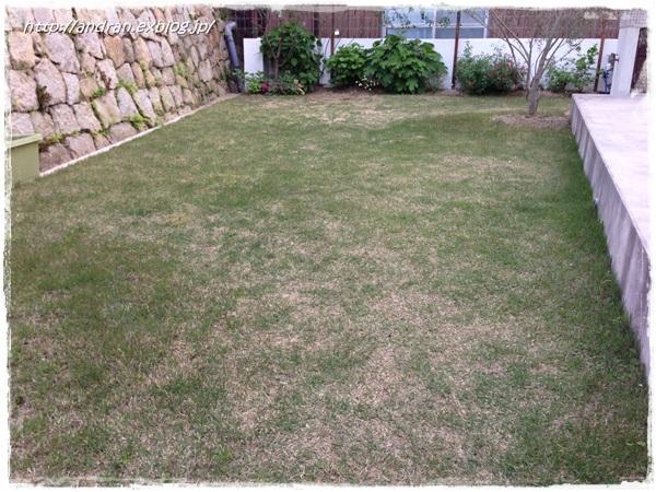 芝生の生育状況(4月~5月)_c0176271_0182959.jpg