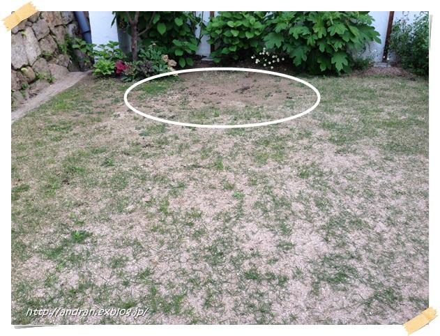 芝生の生育状況(4月~5月)_c0176271_0183911.jpg
