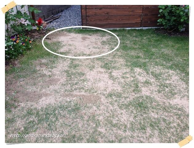 芝生の生育状況(4月~5月)_c0176271_018488.jpg