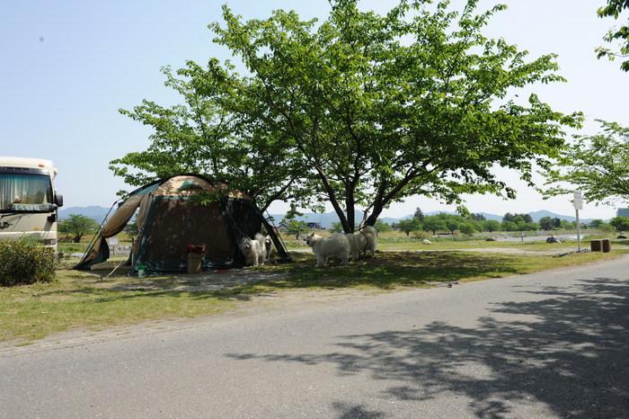 粕川弾丸キャンプ!!_a0049296_2083848.jpg