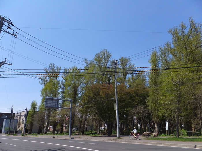 黒丸  お花見!!_c0226202_1922576.jpg