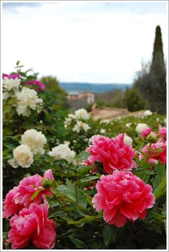 Peonia 牡丹園_f0062510_1753167.jpg