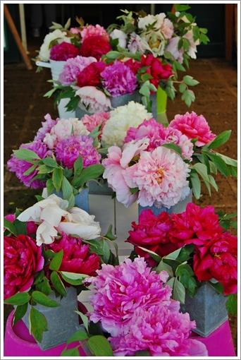 Peonia 牡丹園_f0062510_1955076.jpg