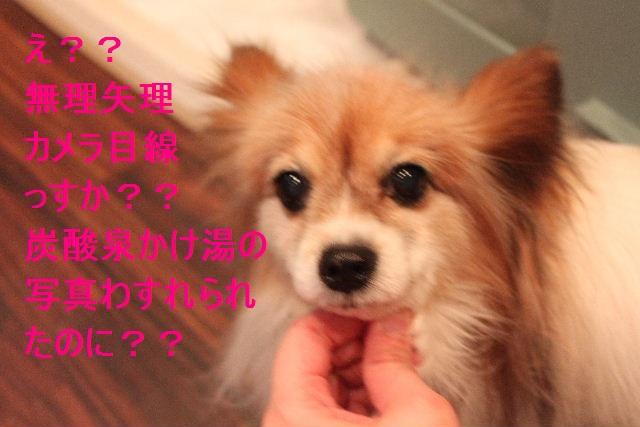 b0130018_22303741.jpg