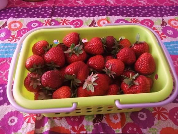 イチゴが届きました。_b0137932_16152990.jpg