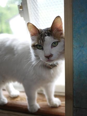 猫のお友だち ホビちゃんガクくんガブくんハルちゃんダイヤちゃんフーちゃん編。_a0143140_22353245.jpg