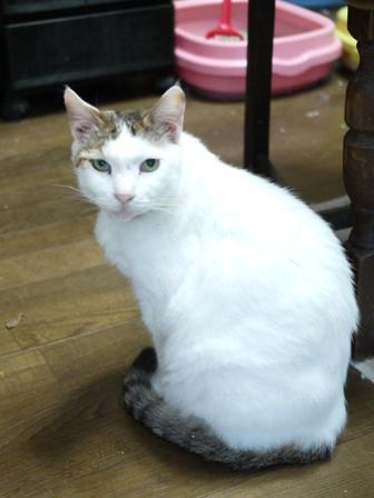 猫のお友だち ホビちゃんガクくんガブくんハルちゃんダイヤちゃんフーちゃん編。_a0143140_22371884.jpg