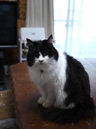猫のお友だち ホビちゃんガクくんガブくんハルちゃんダイヤちゃんフーちゃん編。_a0143140_22375519.jpg
