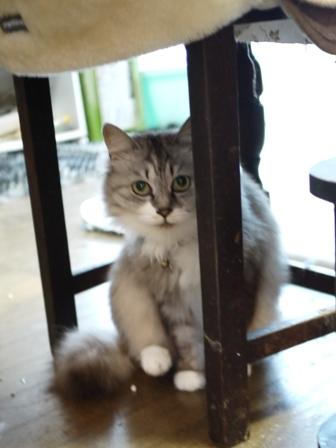 猫のお友だち ホビちゃんガクくんガブくんハルちゃんダイヤちゃんフーちゃん編。_a0143140_22385876.jpg