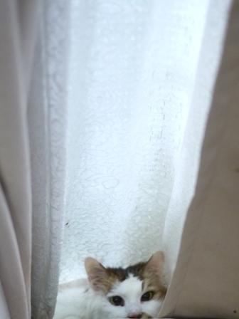猫のお友だち ホビちゃんガクくんガブくんハルちゃんダイヤちゃんフーちゃん編。_a0143140_22392027.jpg