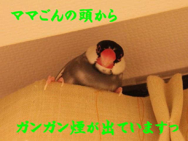b0158061_2025418.jpg