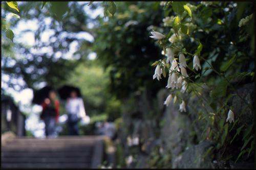 鎌倉 成就院にて_a0281778_19265569.jpg