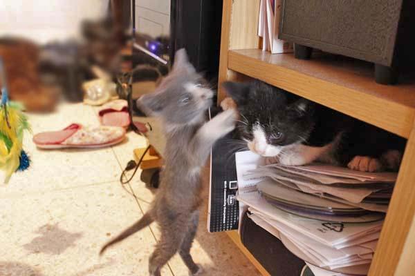 息子んちに仔猫が!^^/_e0092286_1533464.jpg