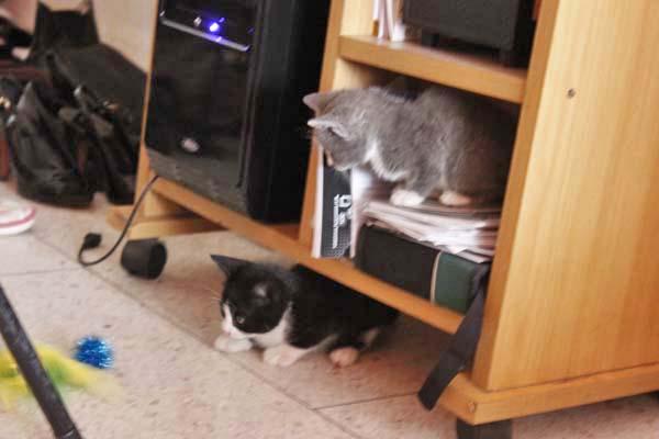 息子んちに仔猫が!^^/_e0092286_15335912.jpg