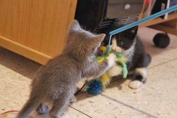 息子んちに仔猫が!^^/_e0092286_15343215.jpg