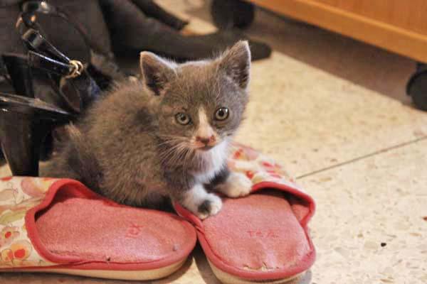 息子んちに仔猫が!^^/_e0092286_15372140.jpg