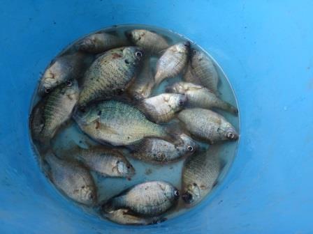 【ご報告】外来魚駆除釣り大会を開催しました!_a0263106_16333940.jpg