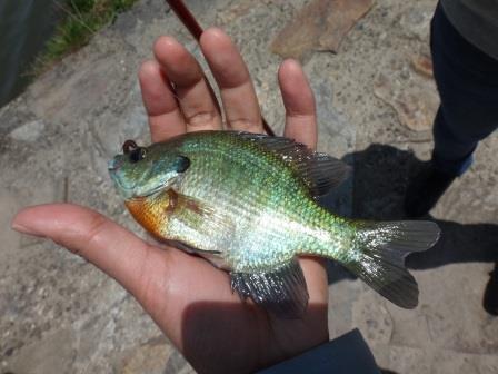 【ご報告】外来魚駆除釣り大会を開催しました!_a0263106_16333952.jpg
